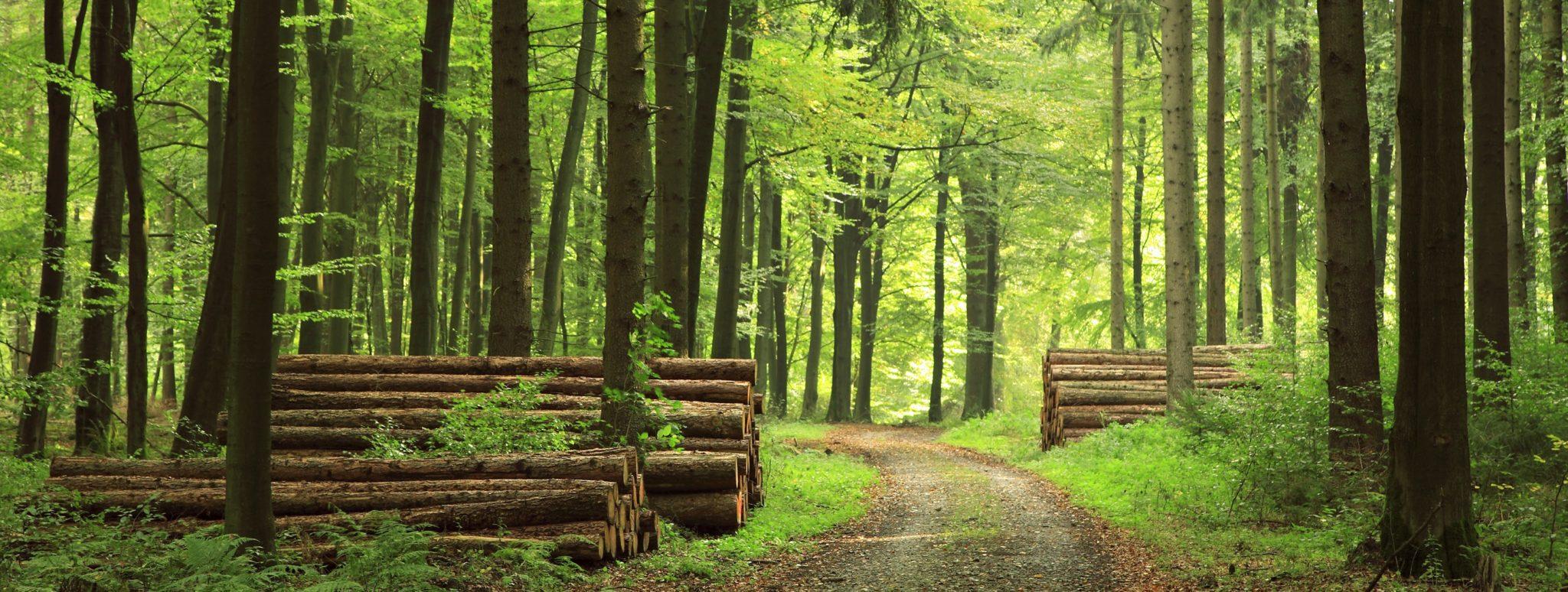 Photo de forêt cible pour le GFI France Valley Patrimoine, Groupement Forestier d'Investissement