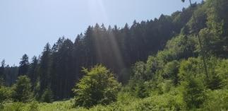Schwartzenberg Groupement Forestier