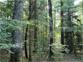 Futaie de Chênes à Gros Bois dominants
